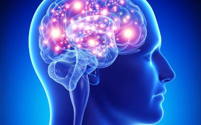Omega 3 For Brain Health